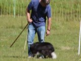 04-Concours chiens de Berger-Lac d'Estaing