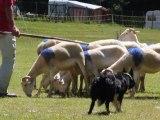 10-Concours chiens de Berger-Lac d'Estaing