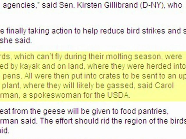 New York Undertakes Mass Geese Euthanization