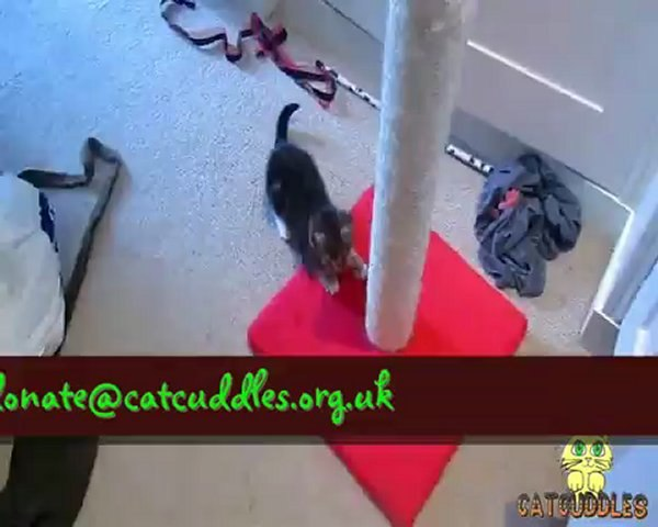 The Charlton Cat-hletic