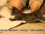Pip, le chaton aux pattes déformées