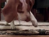 Un chien et une souris