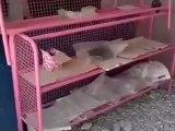 Syria فري برس درعا خربة غزالة   آثار الدمار الذي خلفه القصف المدفعي   الاثنين 23 7 2012 جـ1 Daraa