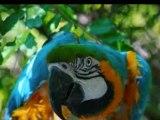 Un monde de perroquets