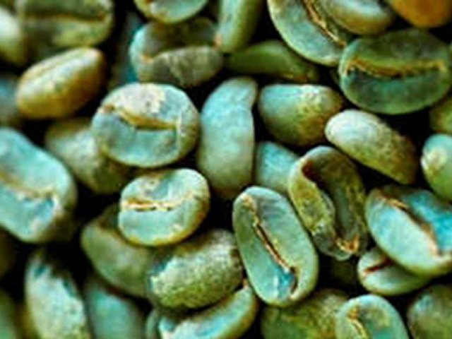 green coffee extract dr oz brand