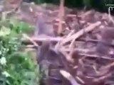 El Poder De La Naturaleza en solo 45 segundos