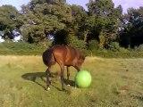 Bébou, plus de 15 mois, retrouve son ballon!!!