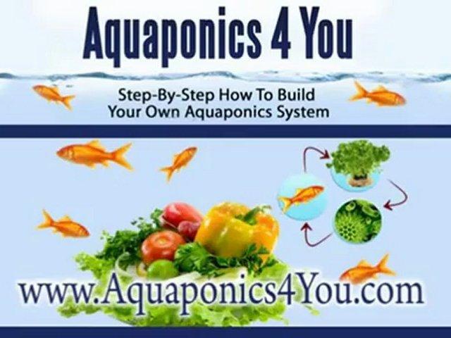 Home Made Aquaponics-Equipment that You Need