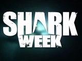 Shark Week - Chatons et chiots déguisés en requin