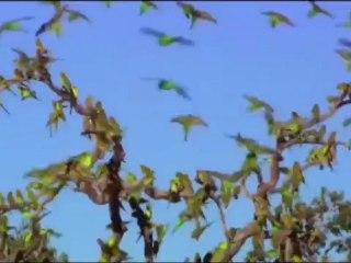 Australie - Pays des Perroquets