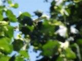 Canadair en action - Canadair in action - Digne 22 Juin 2012