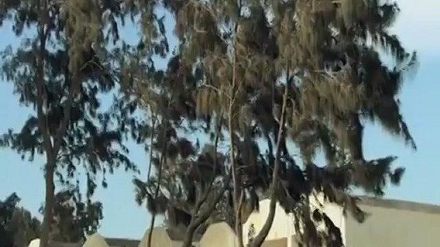 CairoFox.CoM  - مسلسل الهروب الحلقة 30 والاخيرة