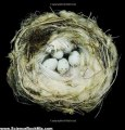 Science Book Review: Nests: Fifty Nests and the Birds that Built Them by Sharon Beals