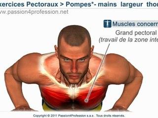 Pectoraux internes