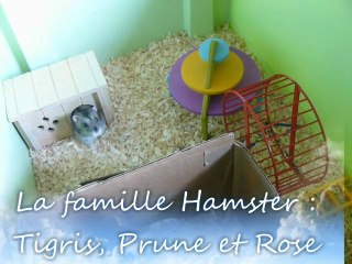 La famille Hamsters