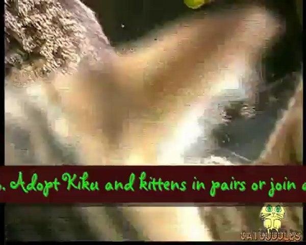 CatCuddles Profile - Kiku and Kittens