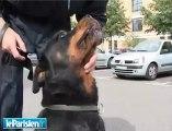Des chaussettes pour les chiens policiers !