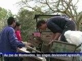 Uruguay: les singes font la loi au zoo de Montevideo