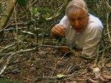 Bowerbirds The Art Of Seduction by David Attenborough