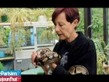 Iguanes, pythons, perroquets... elle veut récupérer ses animaux