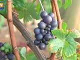 Bourgogne : le château et les vignes de Gevrey-Chambertin vendus à un Chinois