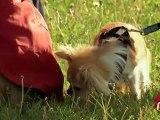 Gag -Pet de chiens royal