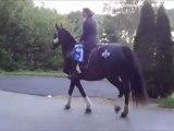 Version complète: À cheval pour mon comté! Samuelle, Candidate ON - Bertrand / A campaign on horseback (full version)