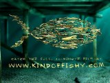 Kind of Fishy - made of driftwood (!) - a Relaxation Aquarium Animation Film