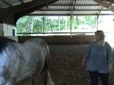 Equicoaching > Développement personnel facilité par la relation homme/cheval
