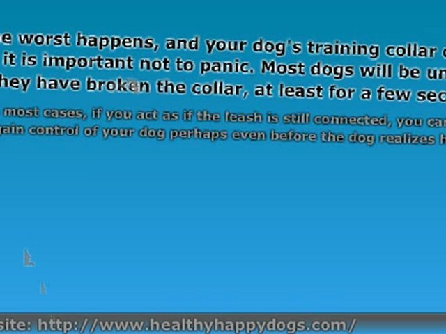 Dog Training Course – Choke Collar Training