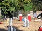 reprise d'entrainement  d agility au canis club pessacais illacais  1 9 2012