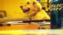 Lustige Tiere 2013 Videoclips Part 2