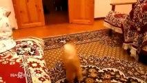 Lustige Tiere 2013 Videoclips Part 1