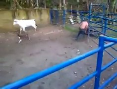vendeta torero