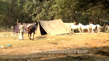 Sonepur Cattle Fair Resource | Learn About, Share and