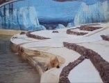 Qannik, le bébé ours blanc du mone sauvage d'Aywaille, fait ses premiers pas...
