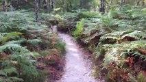 Aitch joue à cache-cache à Fontainebleau