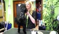 Marylor Dufour toiletteuse pour chien à Mons