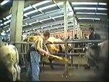 Gaia filme la maltraitance des bêtes au marché de Ciney
