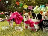 Orange TV Estrenos Trailers: Un chihuahua en Beverly Hills 3