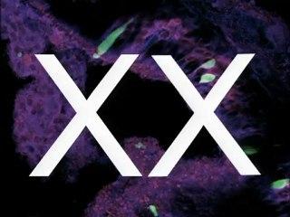 Mystère Science - Hasard et chromosomes