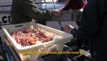 Le Parc naturel marin d'Iroise en actions