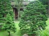 Musée Jardin Albert-Kahn Cabot Ludivine