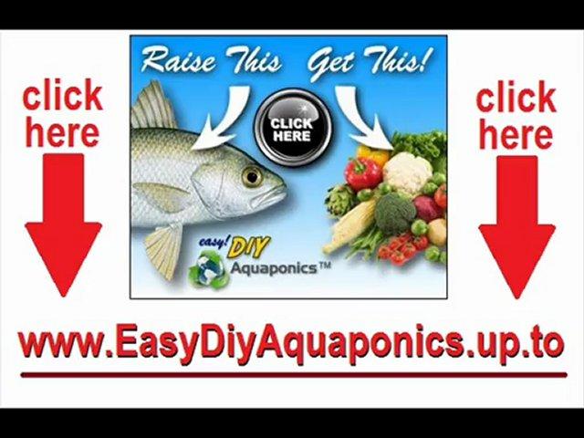 How to build backyard aquaponics system
