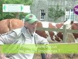 7 octobre 2012 - Vaches en fête : l'occasion de découvrir les races de vaches