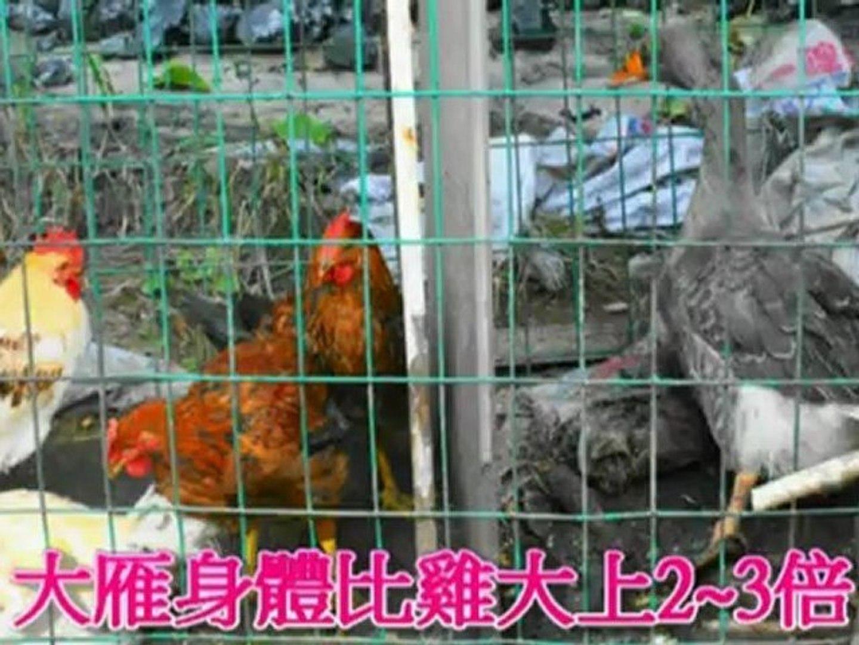 2012-9-12風陵渡三門峽黃河風景