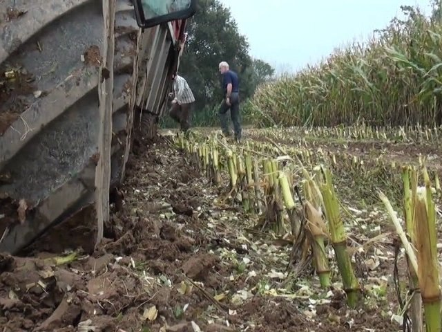 Intempéries : Difficile d'ensiler en Sarthe