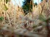 Hay field - Free HD stock footage