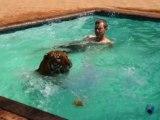 Il joue dans sa piscine avec un tigre !