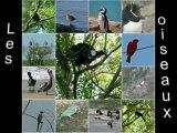 oiseaux diapo